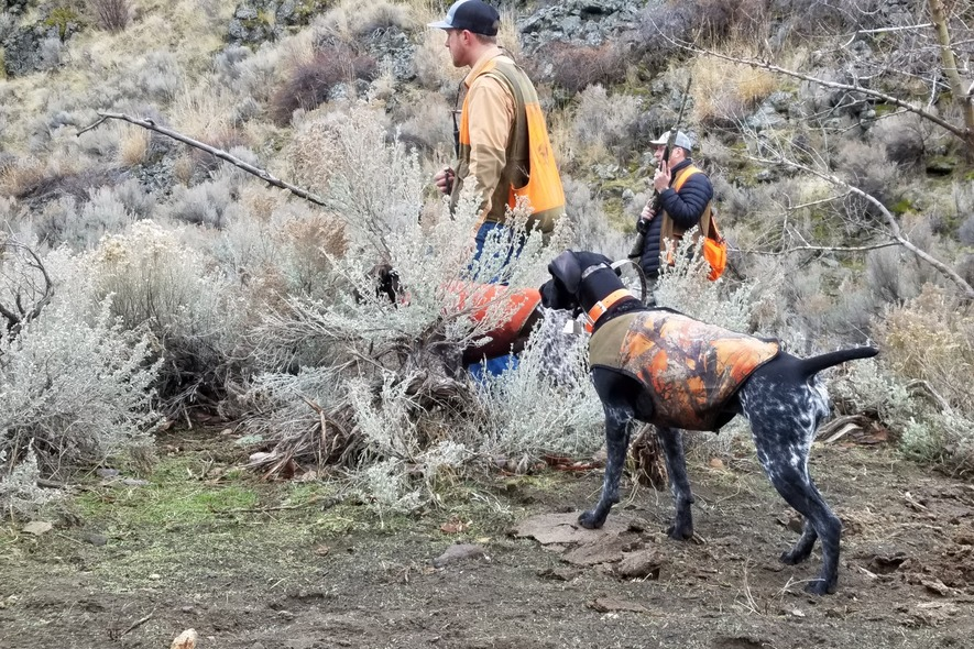 camrin and upland dog pheasant hunting