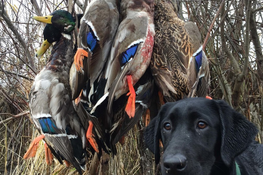 columbia basin guided waterfowl hunts (2)