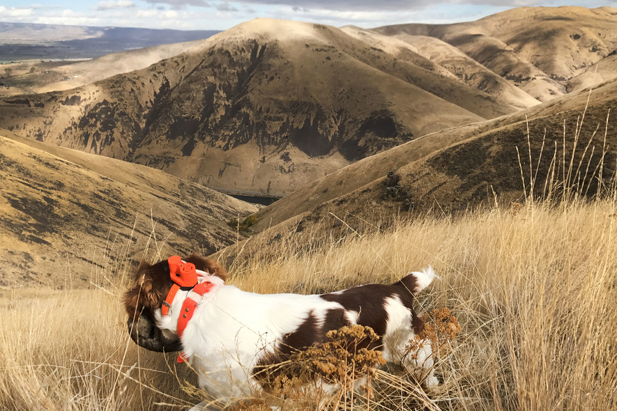 membership on private land for upland bird hunting