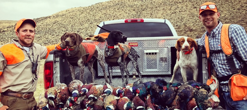 pheasant hunting guides near seattle washington