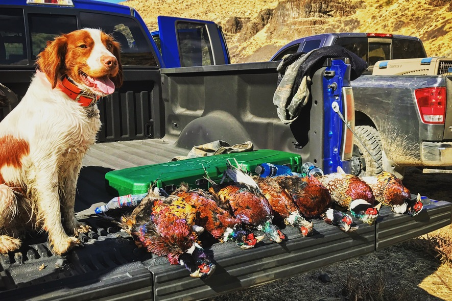 rider on tailgate after pheasant hunt