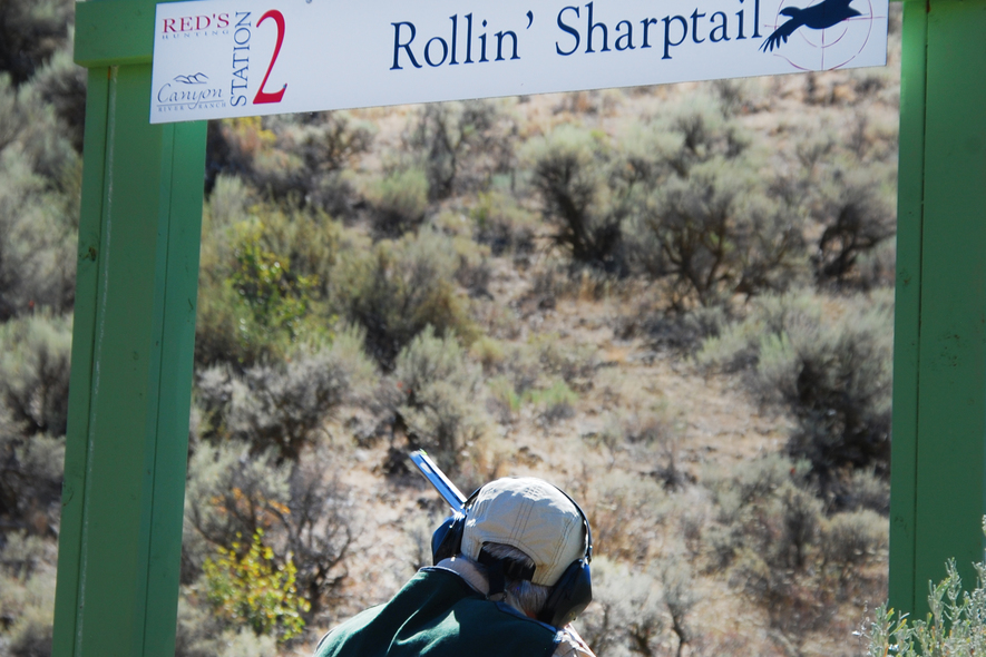 rolling sharptail sporting clays
