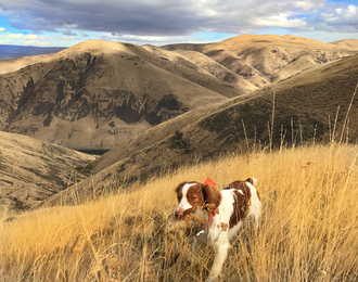 yakima canyon breaks upland bird memberships